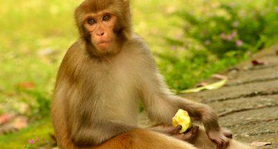 बंदरो से जुडी यह दिलचस्प बातें जान कर दंग रह जायेंगे आप