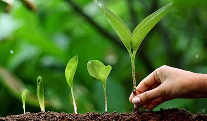 पर्यावरण संरक्षण की दिशा में प्रयास