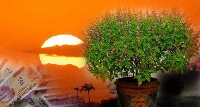 अगर घर में सुख समृद्धि चाहते है तो तुलसी का पौधा इस दिशा में लगाएं